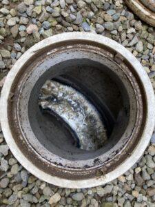 高圧洗浄前の排水マス1